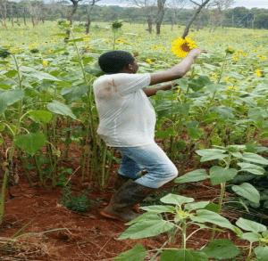 Sécheresse et résilience en Afrique de l'Est