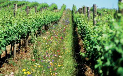 Un vigneron français nous donne les clés de la réussite en bio