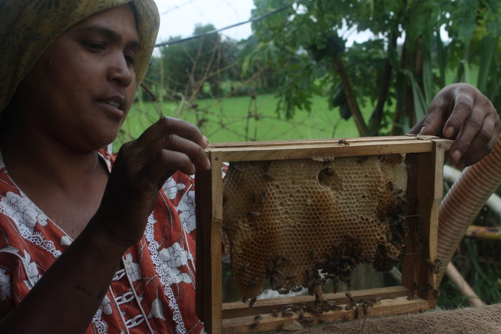 #Hunger4Bees, le déclin des abeilles influence notre alimentation !