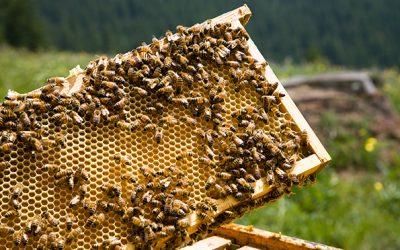 Slow Food rejoint la coalition Save The Bees : citoyens et apiculteurs s'unissent contre les néonicotinoïdes au sein de l'UE !