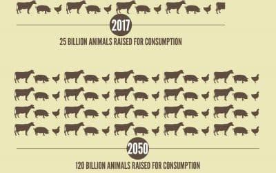 La viande industrielle dévore notre planète