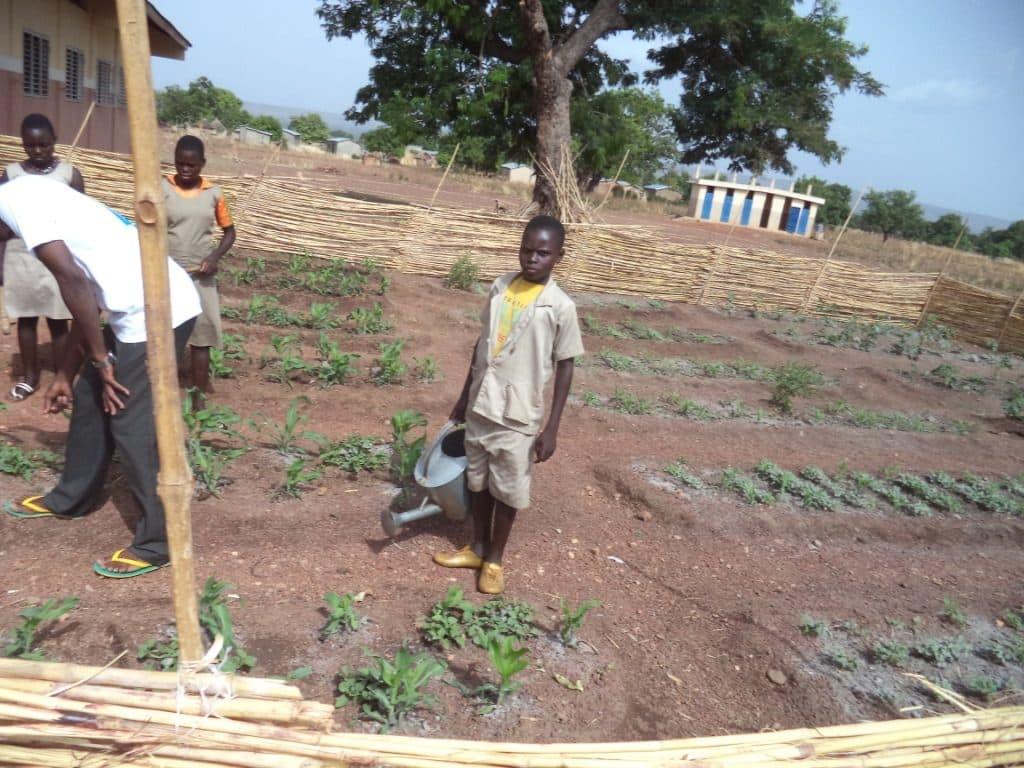 Le changement au menu: les jardins potagers en Bénin