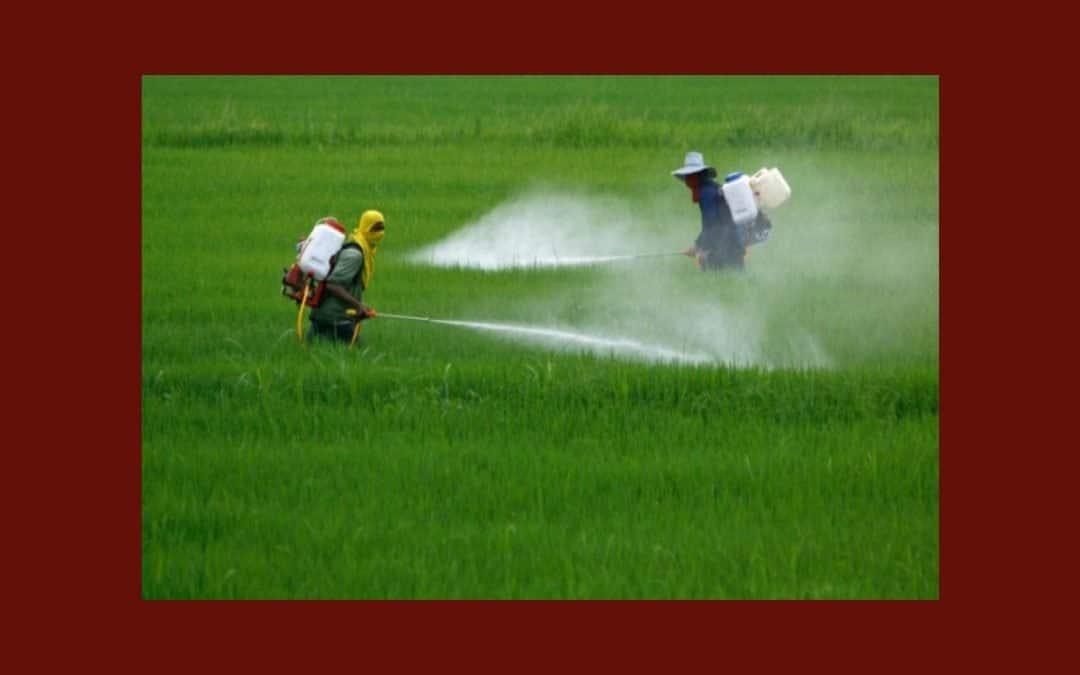 Le glyphosate autorisé par les gouvernements européens pour cinq ans de plus : une catastrophe humaine et écologique, selon Slow Food