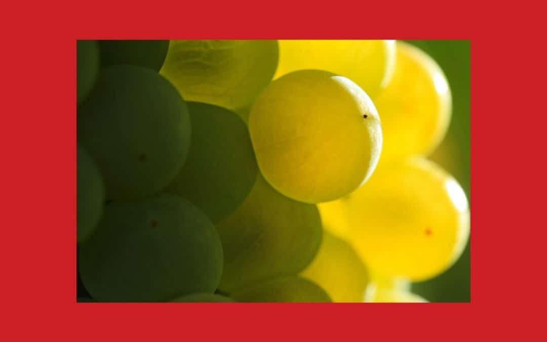 Slow Food en France | Refonte du Comité Biodiversité