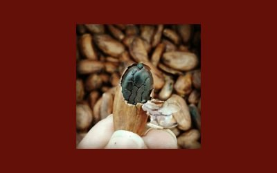 Le changement au menu : Protéger la production de Cabruca Cacao, c'est protéger toute sa biodiversité locale