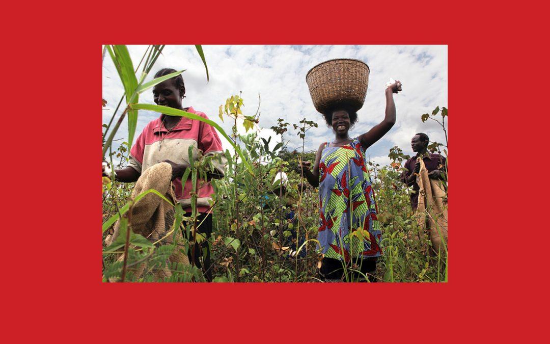 Ouganda : Le président Museveni refuse de signer un projet de loi autorisant les OGM