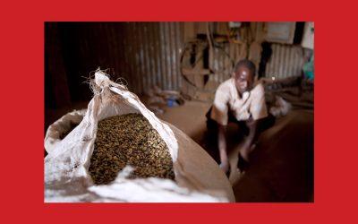 À la découverte des variétés spéciales du café ougandais : le Slow Food Coffee Festival est de retour !