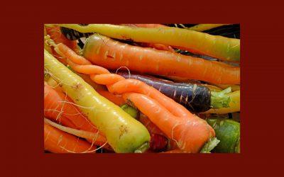 Alimentation et santé : ce qui est bon pour l'environnement, est aussi bon pour nous !