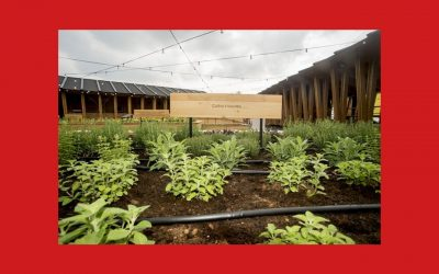 Food for change – Les semences : toute notre alimentation vient de là