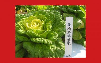 Japon: produits, biodiversité et laboratoires à Terra Madre Salone del Gusto