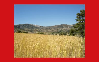 Le réseau de Slow Food en France sera représenté à Terra Madre Salone del Gusto 2018