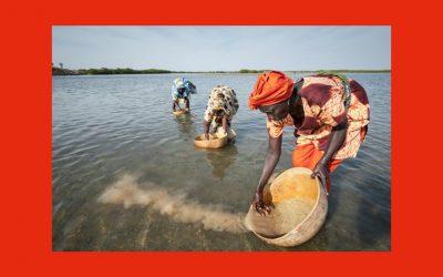 Le mois des producteurs : quand l'agriculture vient en aide au climat !