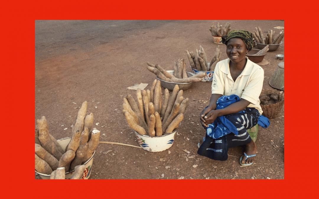 Comment résister au changement climatique en protégeant un tubercule local
