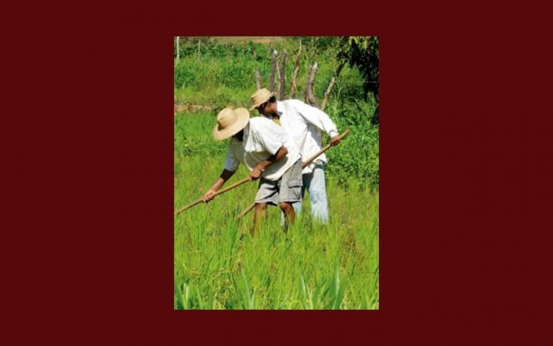 Défendons la sécurité alimentaire au Brésil