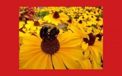 Slow Food lance une action pour les pollinisateurs lors de la Journée mondiale des abeilles