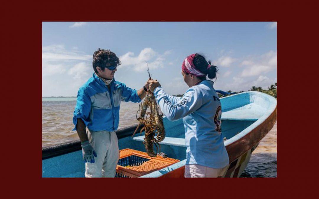Le système de traçabilité du homard des Slow Fish Caraïbes