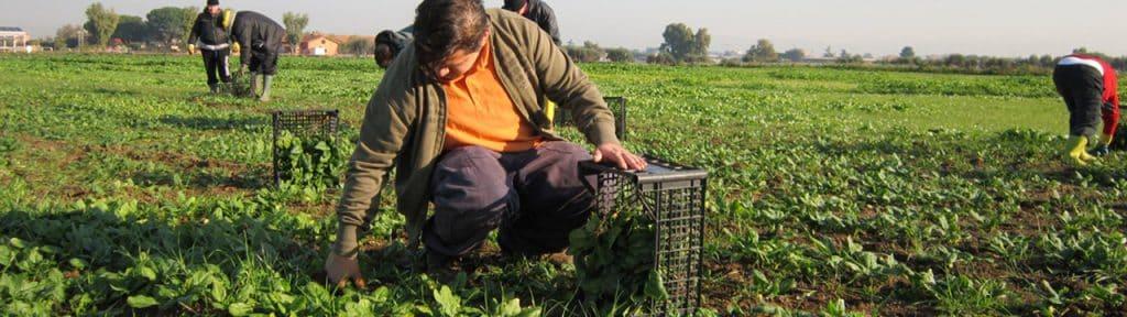 PATRIMOINE AGRICOLE MONDIAL (SIPAM) – L'AGRICULTURE ET L'AVENIR DE LA PLANÈTE