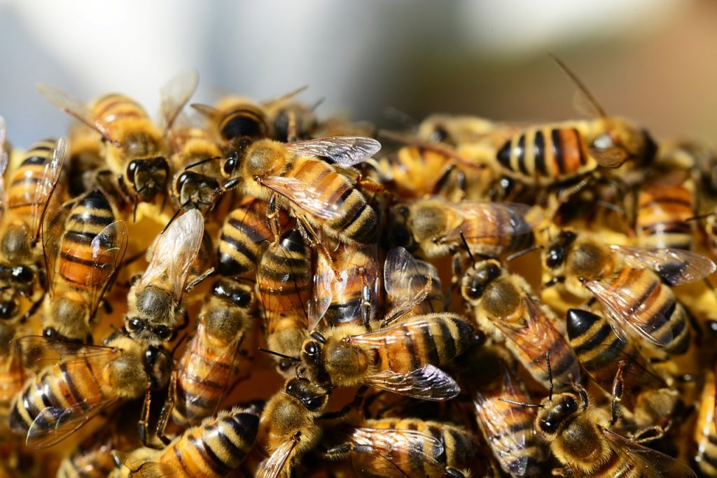 Pas de substituts pour le miel